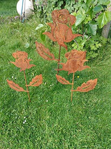 Rose Gartenrose Rostrose