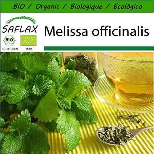 SAFLAX - BIO - Mélisse officinale - 1000 graines - Avec substrat de culture aseptique - Melissa officinalis