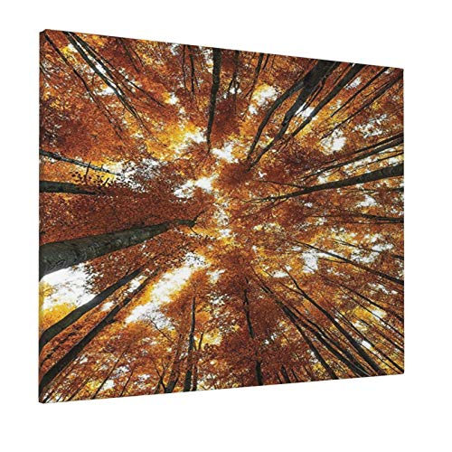 "Hat&C Forest Home Decor Big Beech Trees In Fall with Rays Countryside Trunk Serene Idyllic Landscape Orangepainting 16"" X 20"" Panoramic Canvas Wall Art"