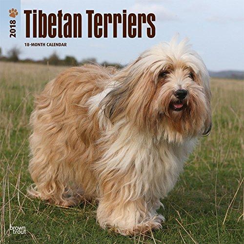 Tibetan Terriers - Tibet-Terrier 2018 - 18-Monatskalender mit freier DogDays-App: Original BrownTrou
