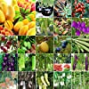 AGROBITS 14 Castagna d'acqua: 5-5000Pc Mixed Homegarden Rare gigante sementi di ortaggi fiori frutta pianta Decor Lot #1
