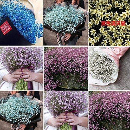 Ncient 30Pcs/Sac Graines de Gypsophile Adorable Fleur Parfumée Bonsaï en Plein Air Graines de Fleurs Jardin pour l'Intérieur et l'Extérieur (Mélange)
