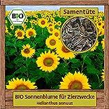 Samenliebe BIO Blumen Samen Sonnenblumen Bienenmeer (Helianthus annuus) | BIO Sonnenblumensamen Blumensamen | BIO Saatgut für 4m²