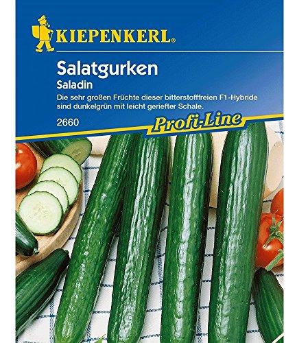 Salatgurken 'Saladin',1 Portion