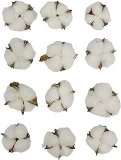 Natural Cotton Pods, Bag of 12