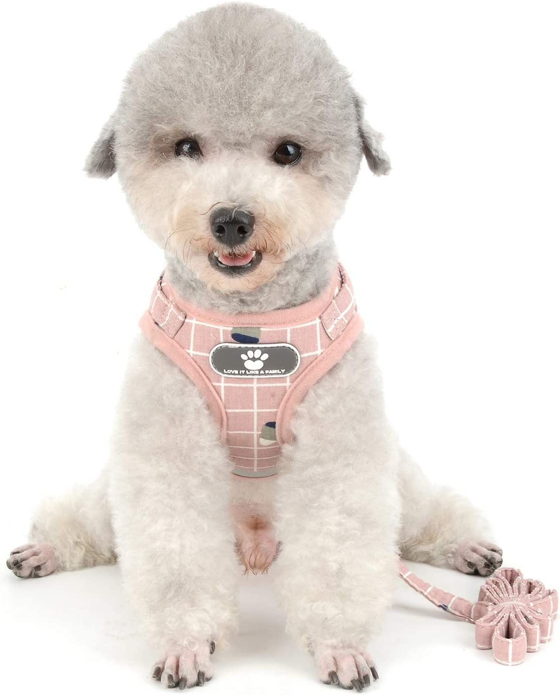 Ranphy Small Max 76% OFF Dog Harness and Leash Proof for Ranking TOP6 Cat Walking Escape