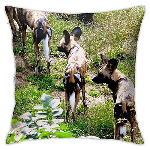 The Pack Funda de almohada decorativa cómoda funda de cojín cuadrada para sofá, dormitorio, silla de coche, funda de almohada de 45,7 x 45,7 cm