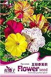 Pinkdose2018 Vente chaude 1 emballage d'origine, 20 graines/paquet, quatre heures MÃlange Graines Organique Belle Vif RougeÃtre Couleur Bloom