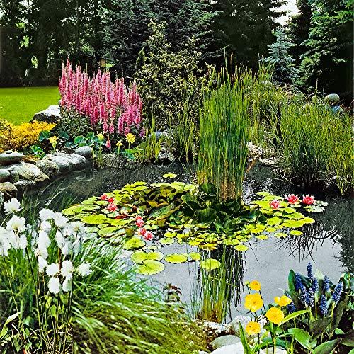 3 Sauerstoffpflanzen | Teichpflanzen Mix | Inklusive Teichkorb | Höhe 30-40cm | Topf-Ø 18cm