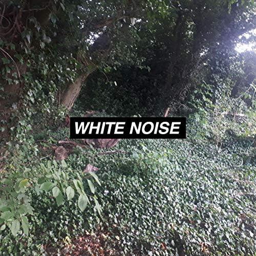 Singing Bowls of Tibet & White Noise Collectors & Rain Noise Collectors