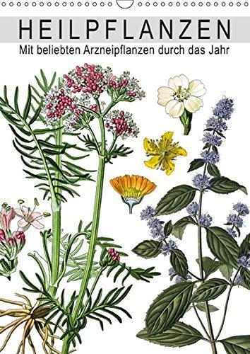 Heilpflanzen (Wandkalender 2017 DIN A3 hoch): Mit beliebten Arzneipflanzen durch das Jahr (Monatskalender, 14 Seiten ) (CALVENDO Gesundheit)