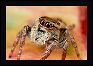 Jumping Spider Portrait, Reunion by Mark Moffett 27