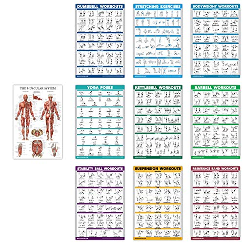 10 Pack - Exercise Workout Poster Set - Dumbbell, Suspension, Kettlebell, Resistance Bands, Stretching, Bodyweight, Barbell, Yoga Poses, Exercise Ball, Muscular System Chart (Paper, 18' x 27')