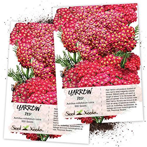 Seed Needs, Red Yarrow (Achillea millefolium rubra) Twin Pack of 500 Seeds Each
