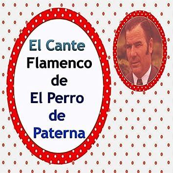 El Cante Flamenco de el Perro de Paterna