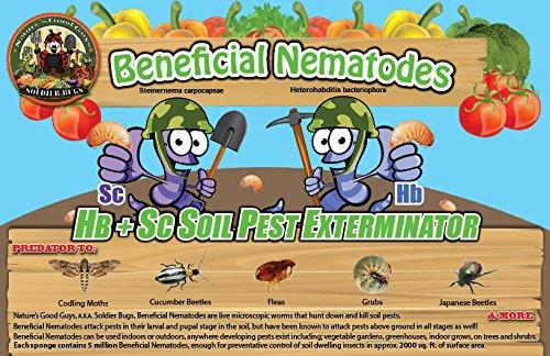 50 Million Beneficial Nematodes for termites