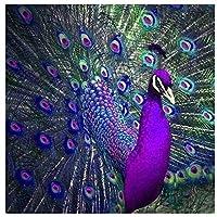デジタル絵画 - 紫の孔雀 - キッズDIY油絵ギフトキット印刷済みキャンバスアートブラシとアクリル顔料を使用した家の装飾(フレームなし、40x50cm)