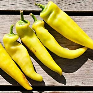 S-pone 100+ Yellow Hot Pepper Seeds Vegetable Seed for Planting Home Gardens Non-GMOS-pone