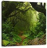 Mystischer Regenwald, Format: 70x70 auf Leinwand, XXL