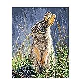 Kit de pintura al óleo sobre lienzo para niños y adultos con pinceles de pintura acrílico pigmento dibujo pintura 2546 conejo comiendo hierba