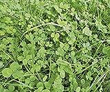 Schnellgrüner Bodenkur von bobby-seeds, schnelle Begrünung von Brachen 500 Gramm