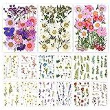 Flores secas prensadas Reales,DIY Conjunto de Flores secas,Hojas secas Mixtas,Flores prensadas Naturales,Flores secas Naturales para Bricolaje,Margaritas secas Naturales,Mezcla de Flores Reales (3)