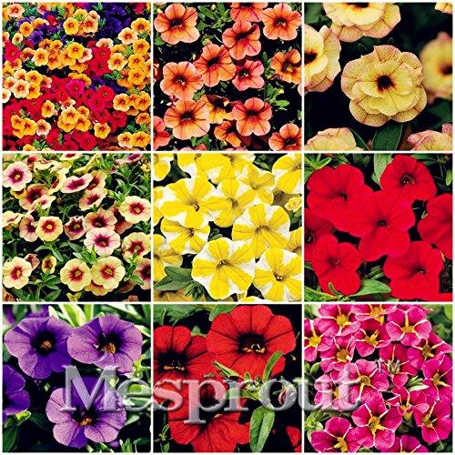 Calibrchoa Million Bell Annual Blumensamen Vary Farben 100 Samen Herbst Jahreszeiten MIX # 32706164372ST