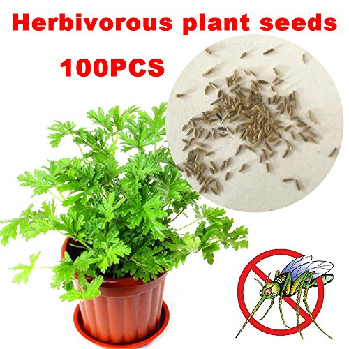 TOPmountain Mozzie Buster Seeds Riddex Plant Seeds Beautiful 100pcs/Bag Beautifying Bonsai Easy Planting Indoor Plant
