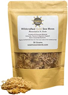 Sea Moss - Wildcrafted Gold Irish Moss- Organic, Raw, Vegan Imported From St. Lucia | 50 Grams
