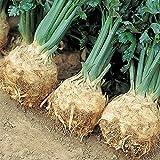 Suffolk Herbes - Bio Prinz - céleri-rave 100 graines