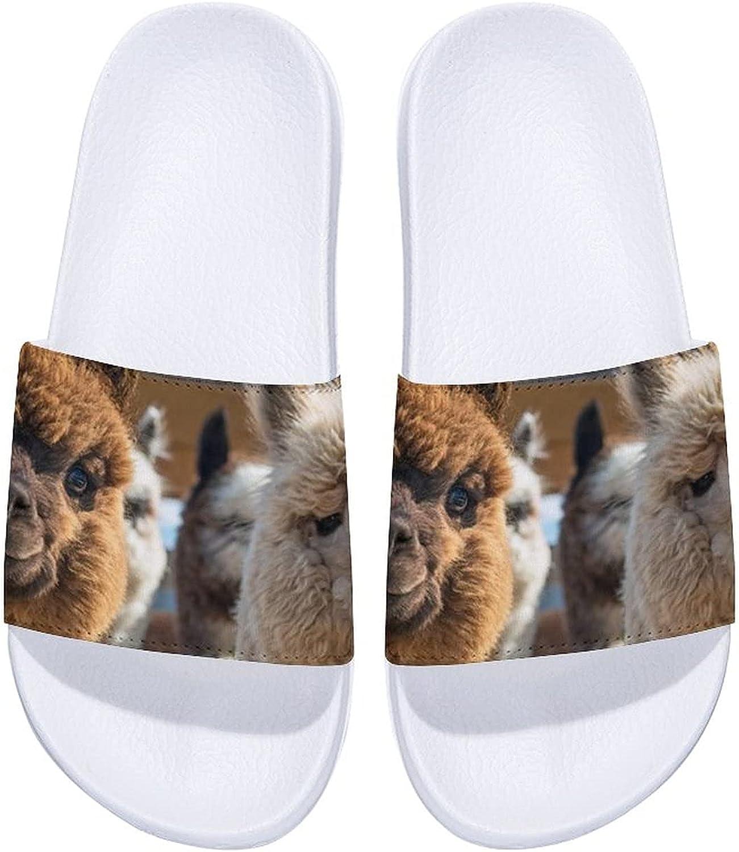 Cute Two Brand new Max 89% OFF Llama-1 Men's and Indoor Women's Sandals Comfort Slide