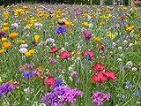 Blumenwiese mit 65 Wildkräuterarten, fünfjährige Bienenweide, insektenfreundliche Blühwiese, Garten wilde mehrjährige winterharte Samenmischung für Bienen Hummeln und Schmetterlinge, Blumenwiesen