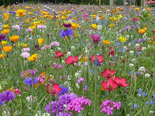 Blumenwiese mit 65 Wildkräuterarten,...