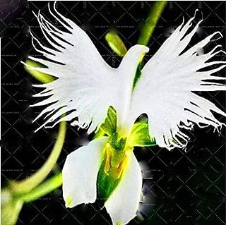 100pcs/bag Rare Orchid Seeds Man Flowers Monkey Orchid Bonsai Seeds Perennial Indoor Flowers for Home Garden Pot Plant Flower
