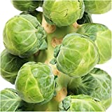 Brussels Sprouts - 500 Seeds - Long Island Improved