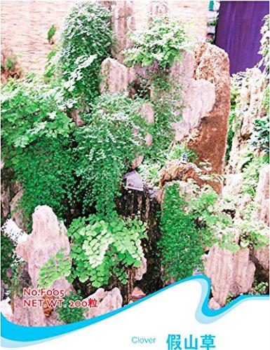 Clover Seeds Trifolium Rockery Herbe Dwarf Feuillage F005 Plante