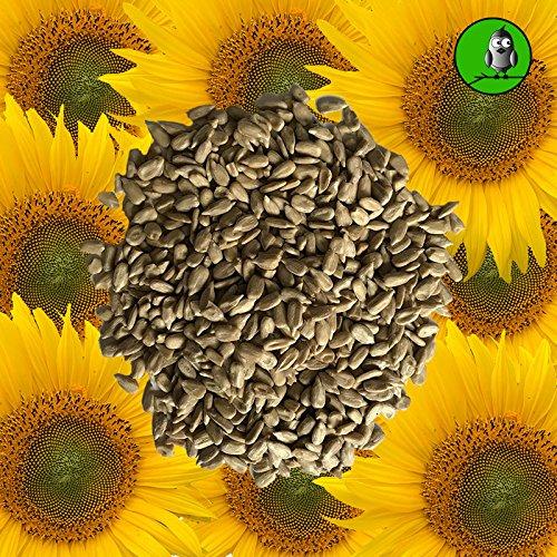 Vogelfood 25 KG Sonnenblumenkerne geschält Marke INNERHALB VON Deutschland