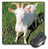 3dRose LLC 8 x 8 x 0.25 Inches Farm Animals Goat Mouse Pad (mp_21325_1)