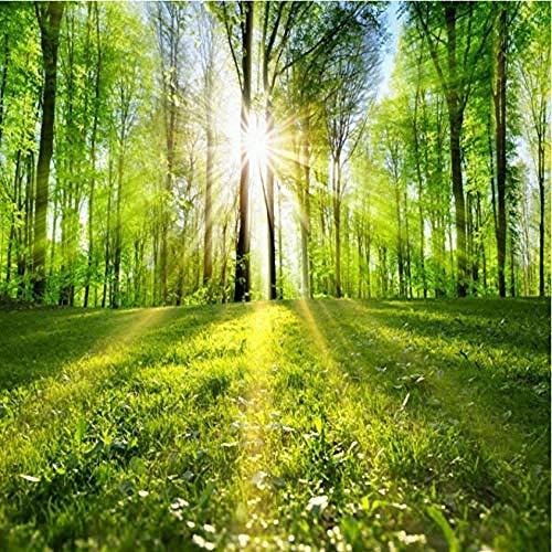 Waldtapete Ruhige Dschungellandschaft Sonne durch Wald Grüne Tapete Wandbild Wohnzimmer 250cmx175cm (98.4x68.9inch)