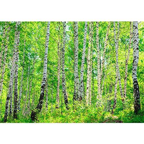 Fototapete Wand Foto Tapete Bild Vliestapete selbstklebende Textiltapete - BIRCH FOREST - Birkenwald Bäume Wald Sonne Birkenhain Birke Birken Gras Natur Baum - no. 007, Größe:350x245cm Vlies