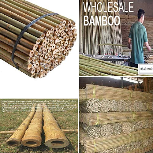 FlickBuyz Strong Heavy Duty Professional Bamboo Plant Support Garden Canes Extra Strong Bamboo Canes 2ft - 10ft (10, 6ft (180 cm))