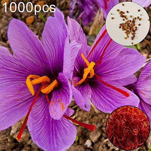 Catkoo Semillas, 1000Pcs Azafrán Crocus Seeds Plant Home Garden Bonsai Ornament Flower Decor, Cocina Adecuada, Balcón, Sala De Estar, Decoración De Jardín 1000pcs