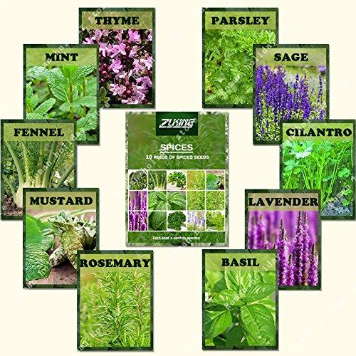 ZLKING 1100 Pcs Mix épices Bonsai graines les plus populaires Nature Bio Apportez la plante Fragrance Semences pour la cuisine jardin Plantation