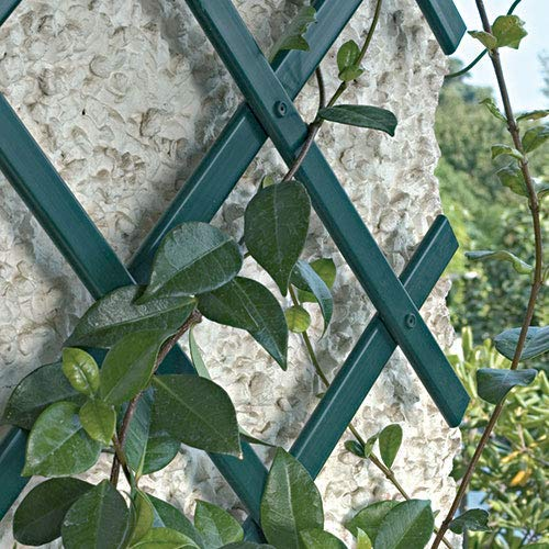 eacommerce Traliccio Grigliato Reticolato Estensibile in PVC per Piante rampicanti Balcone, Giardino, terrazza (3X1 MT, Bianco)