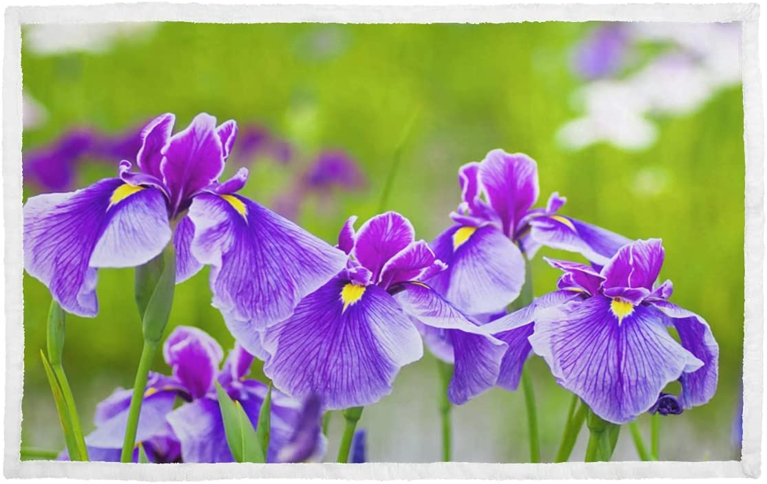 Small Blankets Blossoming Iris Flower in Meadow Ranking TOP9 Blanket depot A