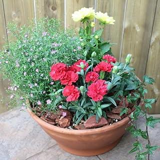 ギフト、ご自宅の庭先にもオススメ店長おまかせ季節に合わせた寄せ植え 園芸 プレゼント ギフト ガーデニング 引越し祝い