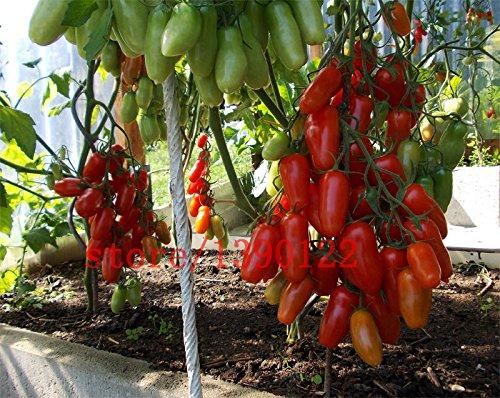 100 PCS grosses graines d'arbres de tomate cerise nouveau graines de tomates italie NO OGM fruits et légumes pour la plantation des graines de jardin à domicile