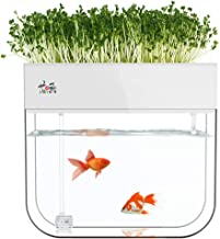 Aquaponic Fish Tank Grow Plants Seed Sprouter Wheatgrass Sprouts Hydroponic Cleaning Ecosystem Water Garden Fish Tank