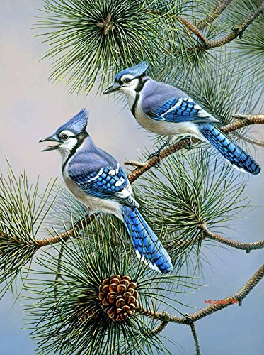 Toland Home Garden Blue Jay Duet 12.5 x 18 Inch Decorative Fall Winter Bird Pine Tree Garden Flag - 1110433