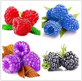 blue raspberry plants for sale